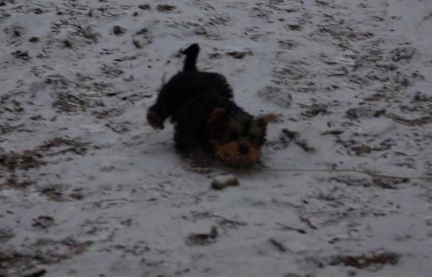 kutya.hóban