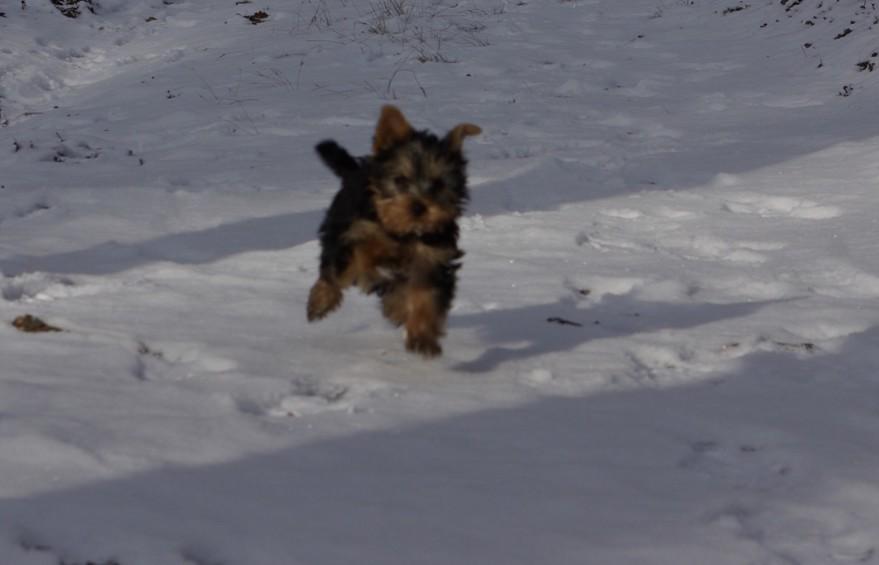 kutya.hoban.fut